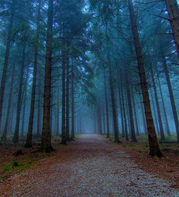 The Darkest Woods 2
