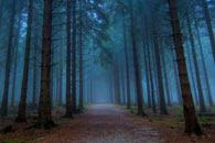 скачать The Darkest Woods 2 на android